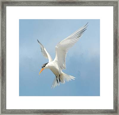Flutter 2 Framed Print by Fraida Gutovich