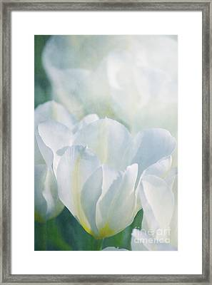 White Tulips Framed Print by Angela Doelling AD DESIGN Photo and PhotoArt
