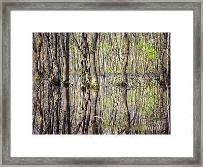 Forest In The Swamp Framed Print by Catalin Petolea