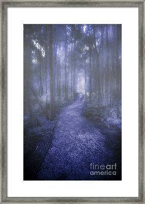 Forest Of Darkness Framed Print by Jorgo Photography - Wall Art Gallery