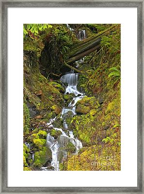 Streaming Through Rainforest Rubble Framed Print by Adam Jewell