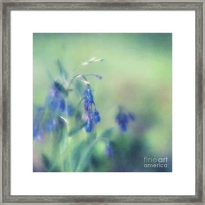Bluebells Framed Print by Priska Wettstein