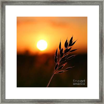 Golden Sunset Framed Print by Franziskus Pfleghart