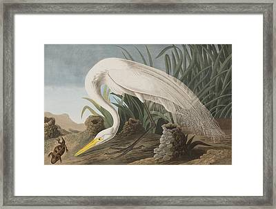Great Egret Framed Print by John James Audubon