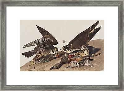 Great-footed Hawk Framed Print by John James Audubon