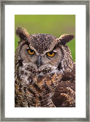 Great Horned Owl Framed Print by Alexander Rozinov