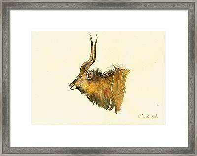 Greater Kudu Framed Print by Juan  Bosco
