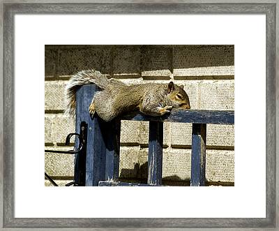 Grey Squirrel Framed Print by Mike Lester