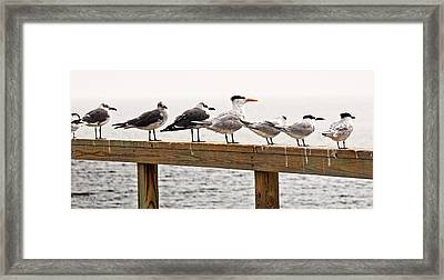 Grounded By Fog Framed Print by Christopher Holmes