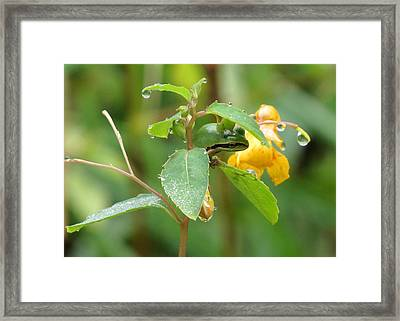 Hanging In There Framed Print by I'ina Van Lawick