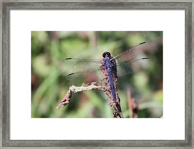 Hanging On Framed Print by Karol Livote