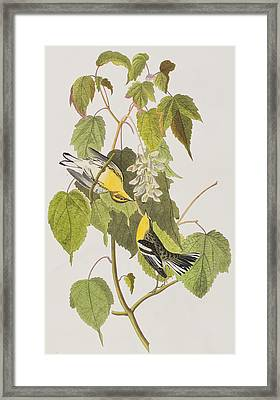 Hemlock Warbler Framed Print by John James Audubon