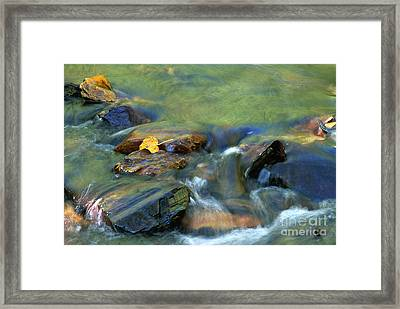 Hitching A Ride Framed Print by Sandra Bronstein