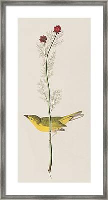 Hooded Warbler Framed Print by John James Audubon