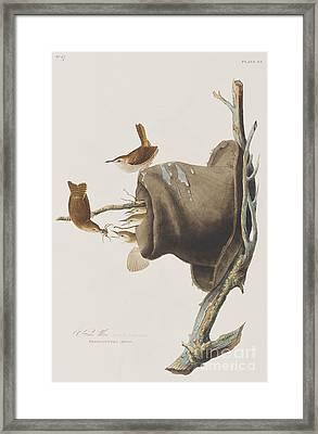 House Wren Framed Print by John James Audubon