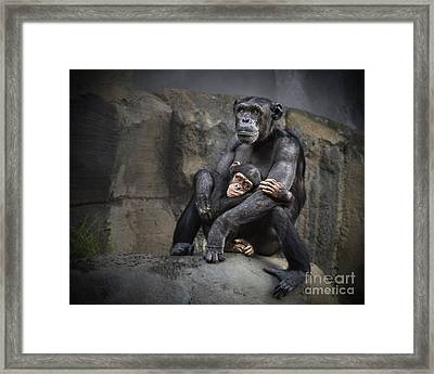 Hugs Framed Print by Jamie Pham