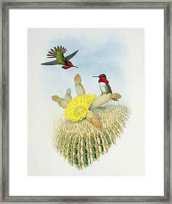 Hummingbirds Framed Print by John Gould