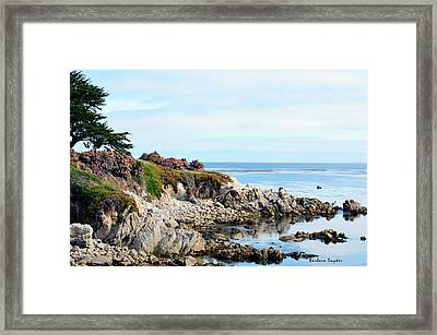 Ice Plant Along The Monterey Shore 2 Framed Print by Barbara Snyder