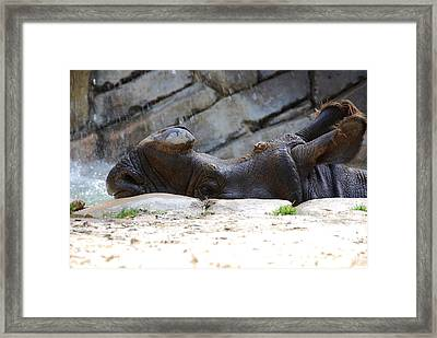 Indian Rhinoceros Framed Print by Thea Wolff