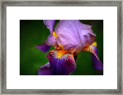 Iris Abstract Framed Print by Jessica Jenney