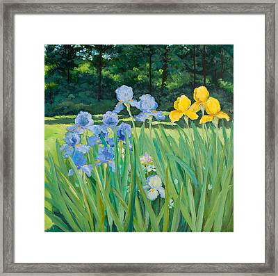Irises In The Garden Framed Print by Betty McGlamery