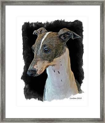Italian Greyhound Framed Print by Larry Linton