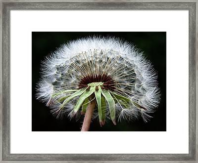 Its A Dandy Framed Print by Karen M Scovill
