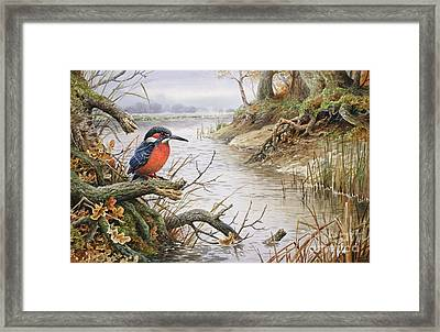 Kingfisher Framed Print by Carl Donner