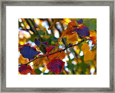 Leaves Of Autumn Framed Print by Stephen Anderson