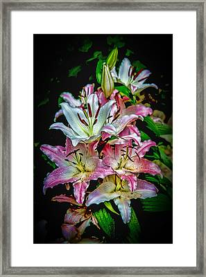 Lilies Of The Falls Framed Print by John Haldane