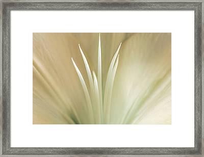 Lily Framed Print by Cindy Grundsten