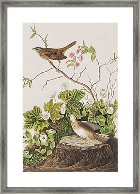 Lincoln Finch Framed Print by John James Audubon