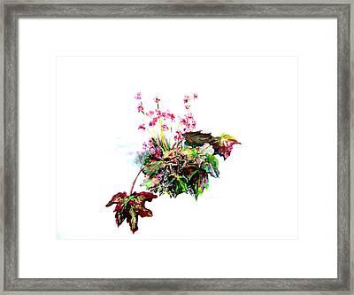 Linda Begonia Framed Print by Mindy Newman