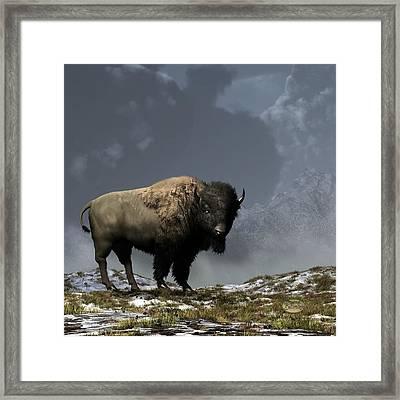 Lonely Bison Framed Print by Daniel Eskridge