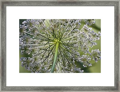 Look Up Framed Print by Teresa Mucha
