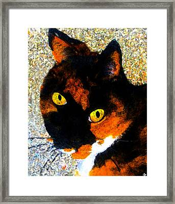 Looking Cat Framed Print by David Lee Thompson