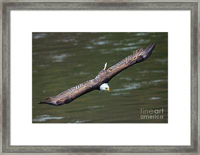 Looking For A Meal Framed Print by Mike Dawson