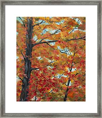 Looking Up Framed Print by Pete Maier
