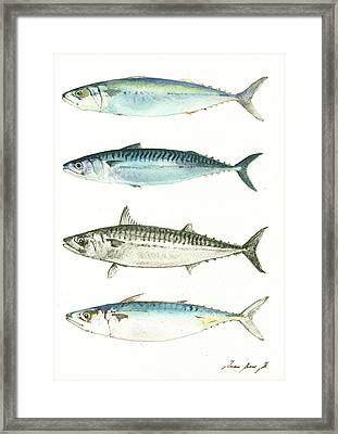 Mackerel Fishes Framed Print by Juan Bosco