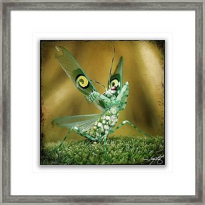 Mantis 15 Framed Print by Ingrid Smith-Johnsen