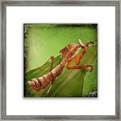 Mantis 17 Framed Print by Ingrid Smith-Johnsen