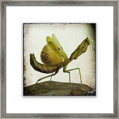 Mantis 20 Framed Print by Ingrid Smith-Johnsen