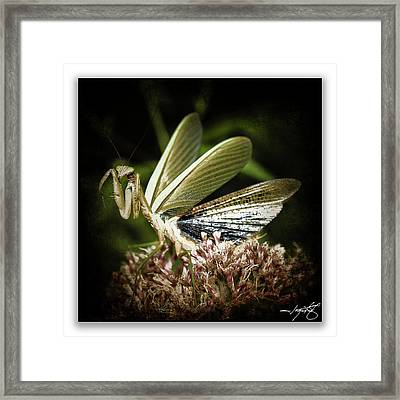 Mantis 22 Framed Print by Ingrid Smith-Johnsen