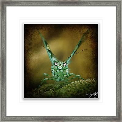Mantis 5 Framed Print by Ingrid Smith-Johnsen