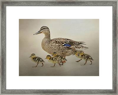 March Of The Ducklings Framed Print by Fraida Gutovich