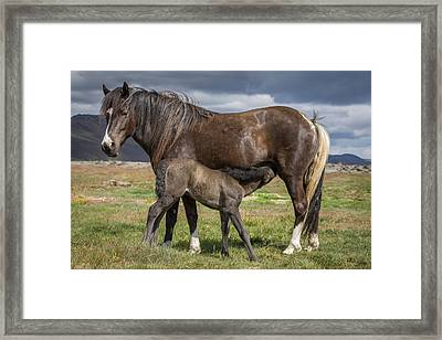 Mare And Foal, Icelandicelandic Framed Print by Panoramic Images