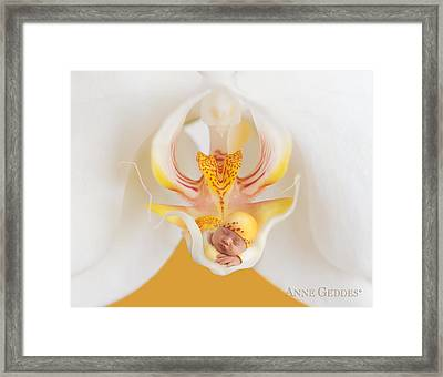 Mia In Moth Orchid Framed Print by Anne Geddes