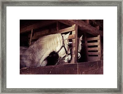 Mirror Image Horses Framed Print by Erin Cadigan