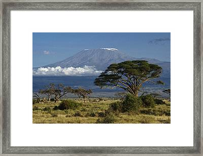 Mount Kilimanjaro Framed Print by Michele Burgess
