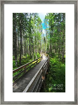 Mud Pond Trail Framed Print by Catherine Reusch  Daley